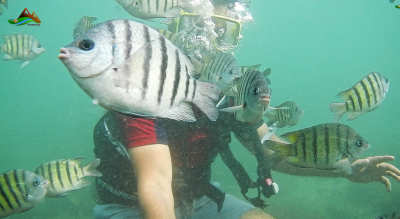 Republic Day Special - Scuba Diving with Konkan's Famous Sea Fort