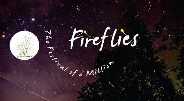 Fireflies Festival, Purushwadi