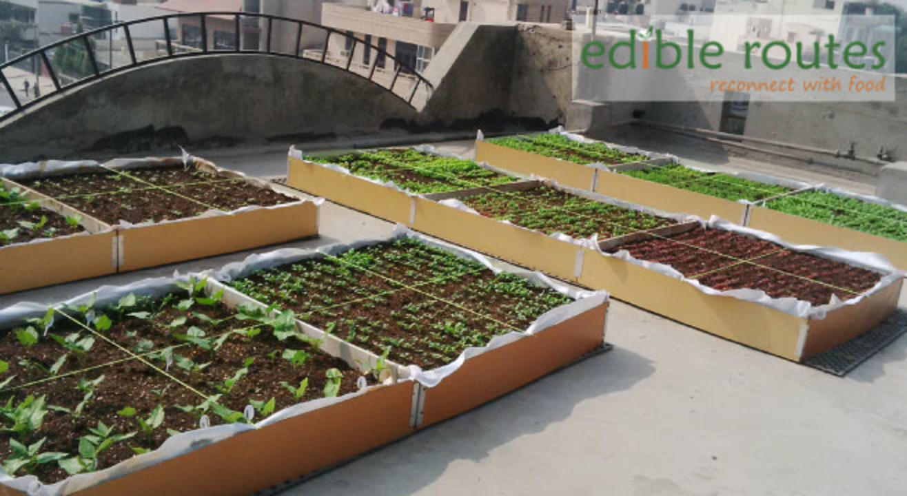 Intro to Urban Farming: A Hands-on Workshop