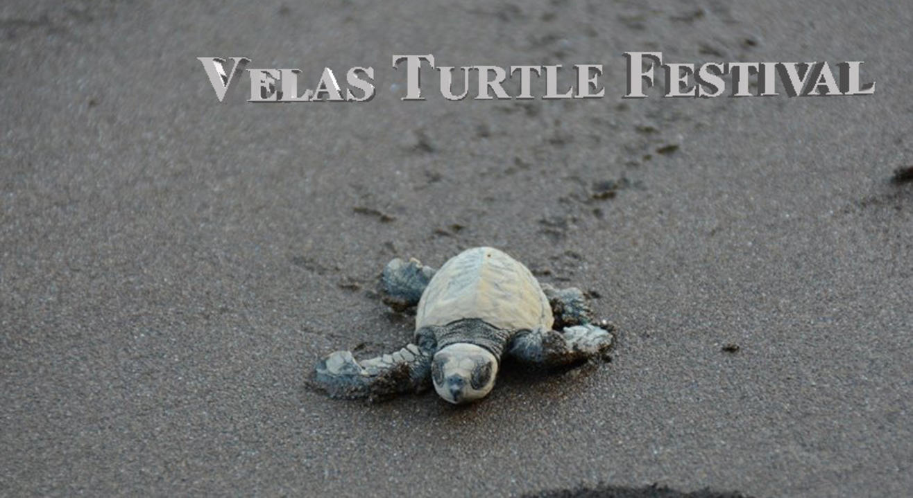 Velas Turtle Festival | Trek India