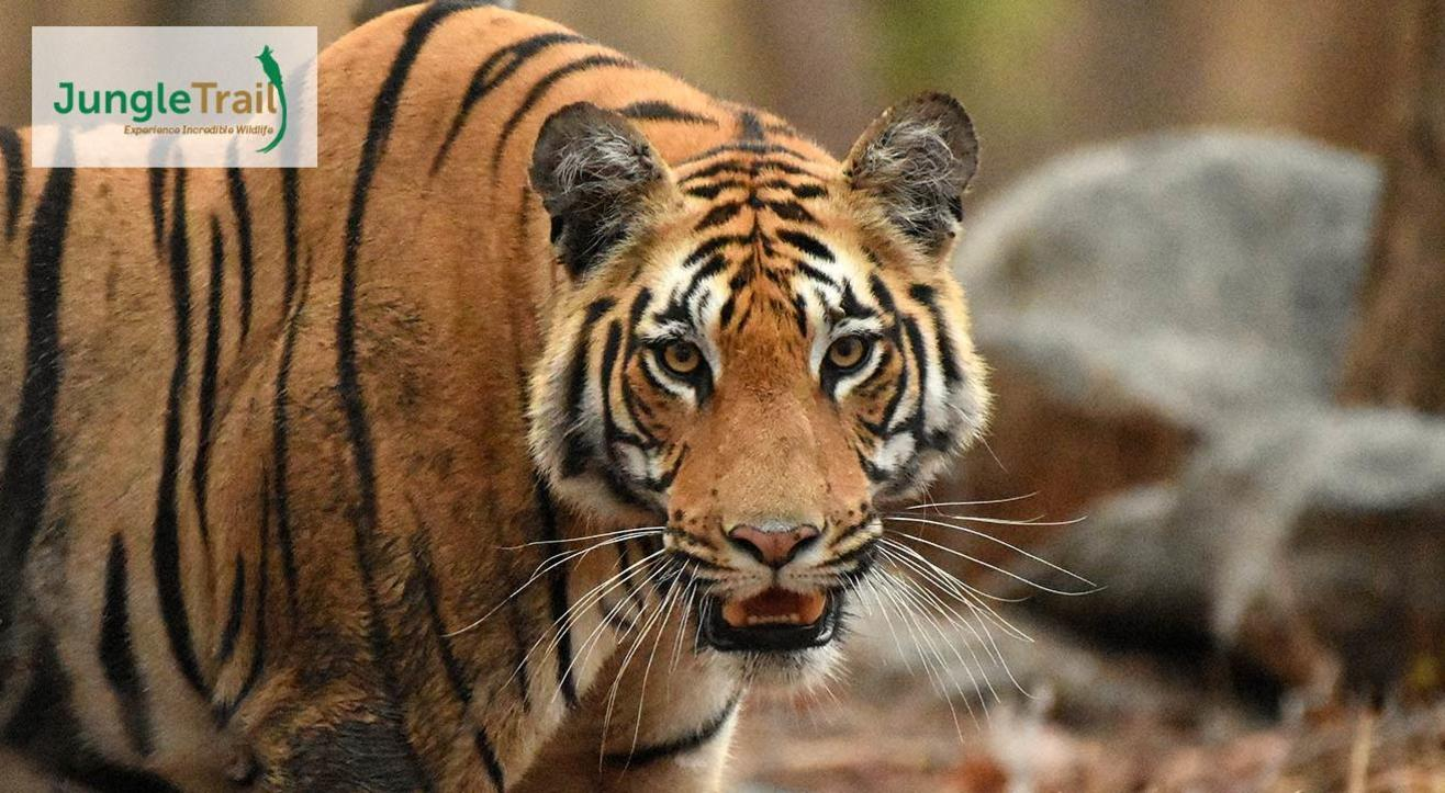 Explore Pench – With Jungle Trail