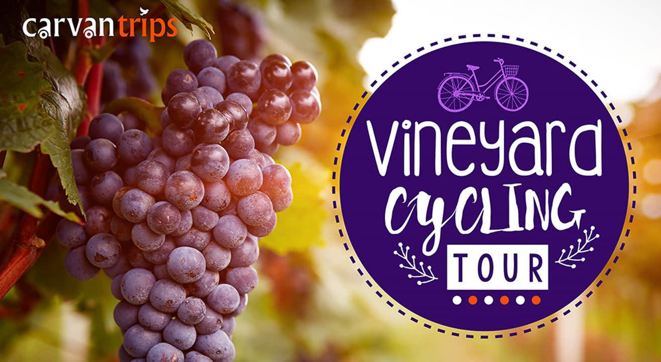 Vineyard Tour & Cycling