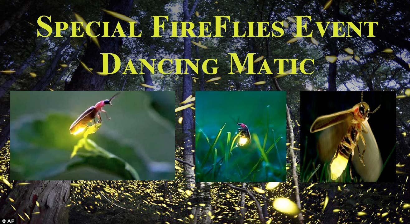 Special Fireflies Event – Rajmachi