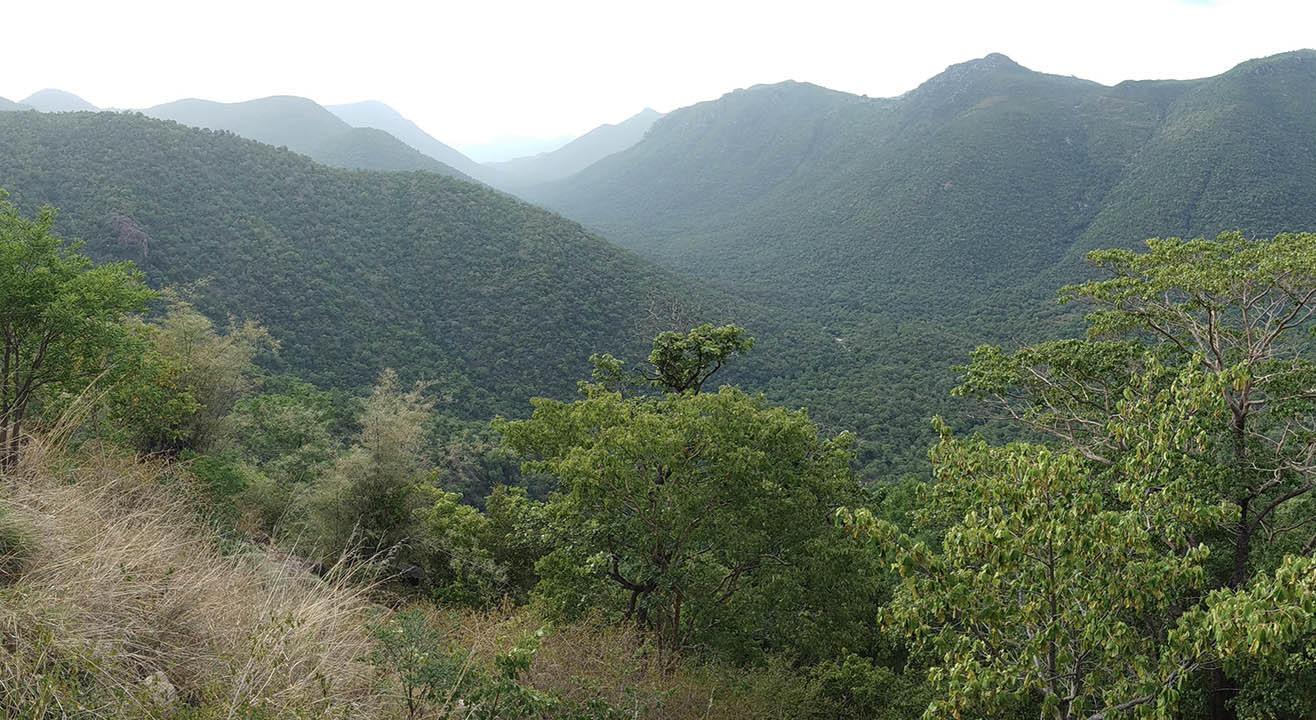 Hogenakkal Falls Drive Experience