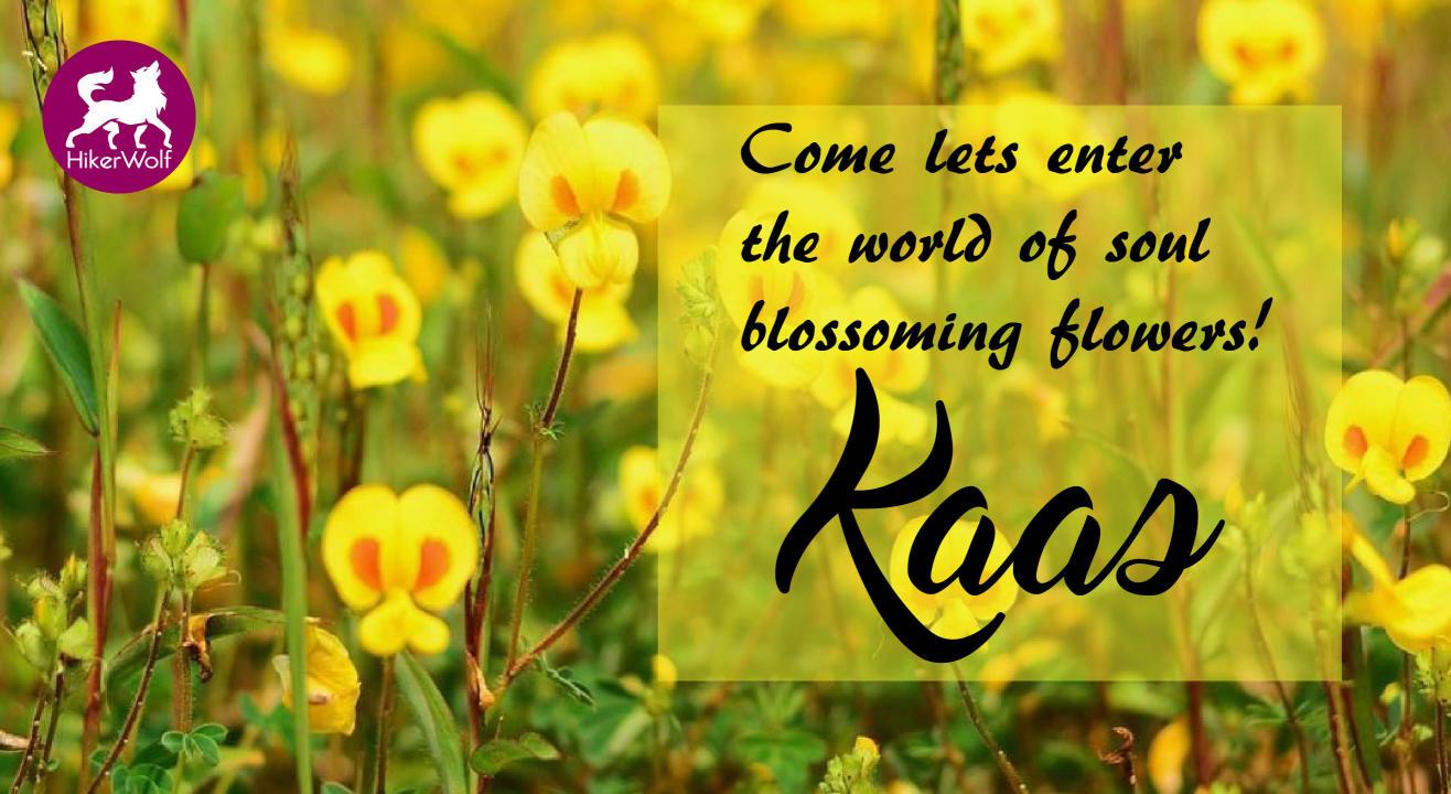 Trip to Kaas Plateau