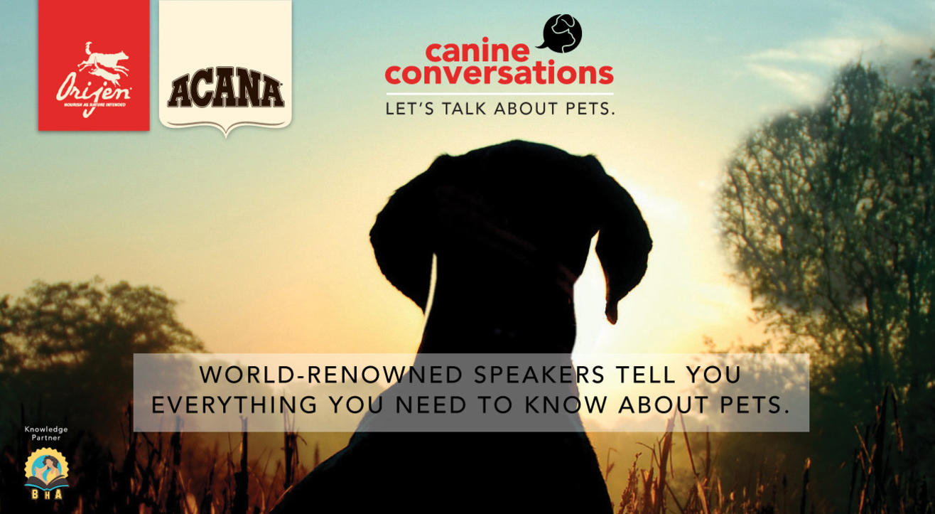 Canine Conversations – Let's Talk About Pets