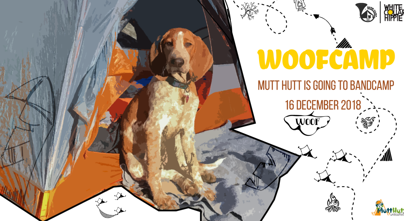 WoofCamp: Mutt Hutt at BandCamp