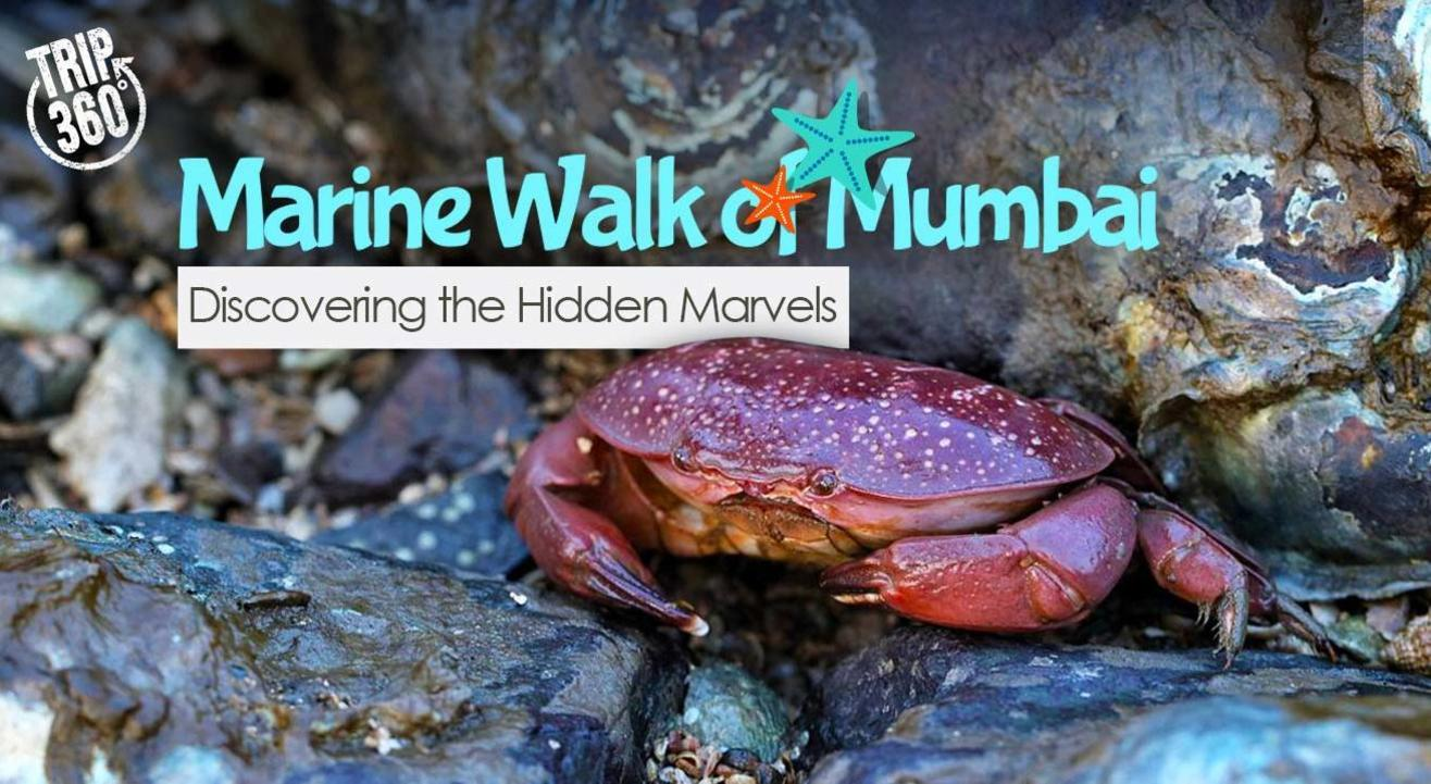 Marine Walk of Mumbai: Discovering the Hidden Marvels