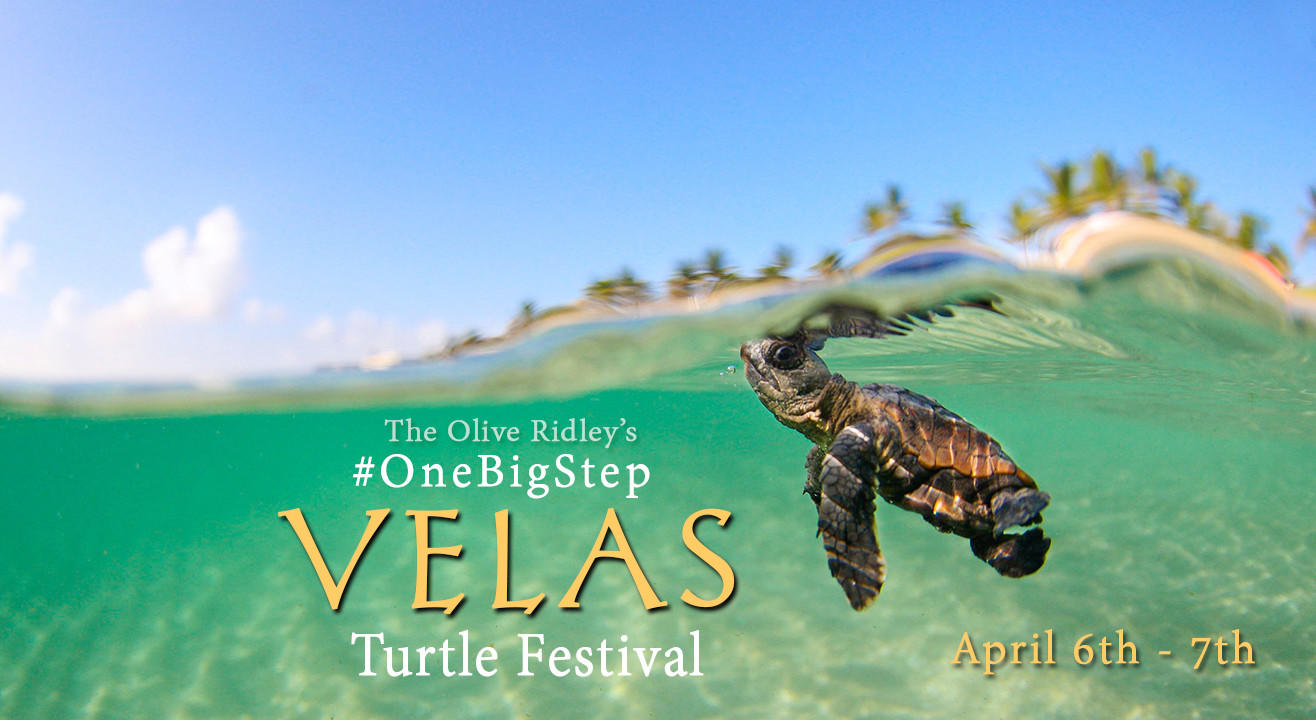 One Big Step - The Olive Ridley's Turtle Festival at Velas