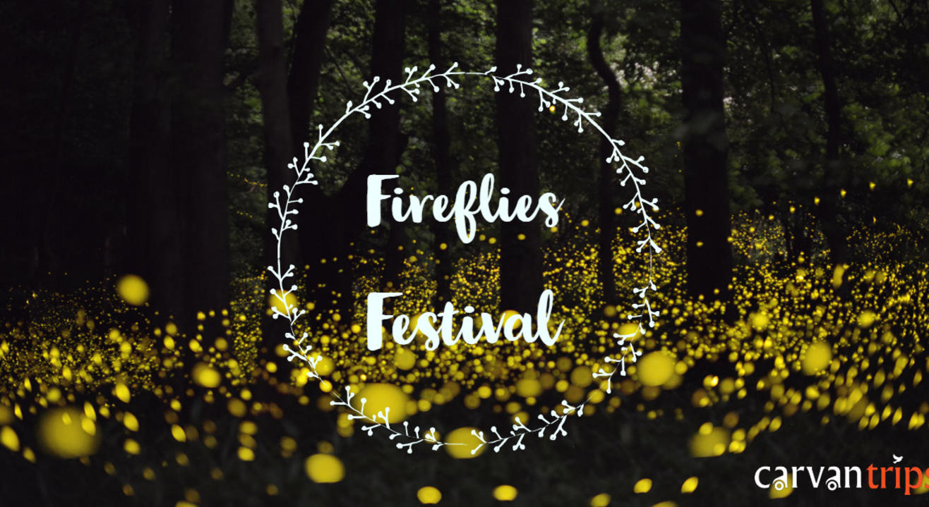 Fireflies Festival Camping by Carvan Trips