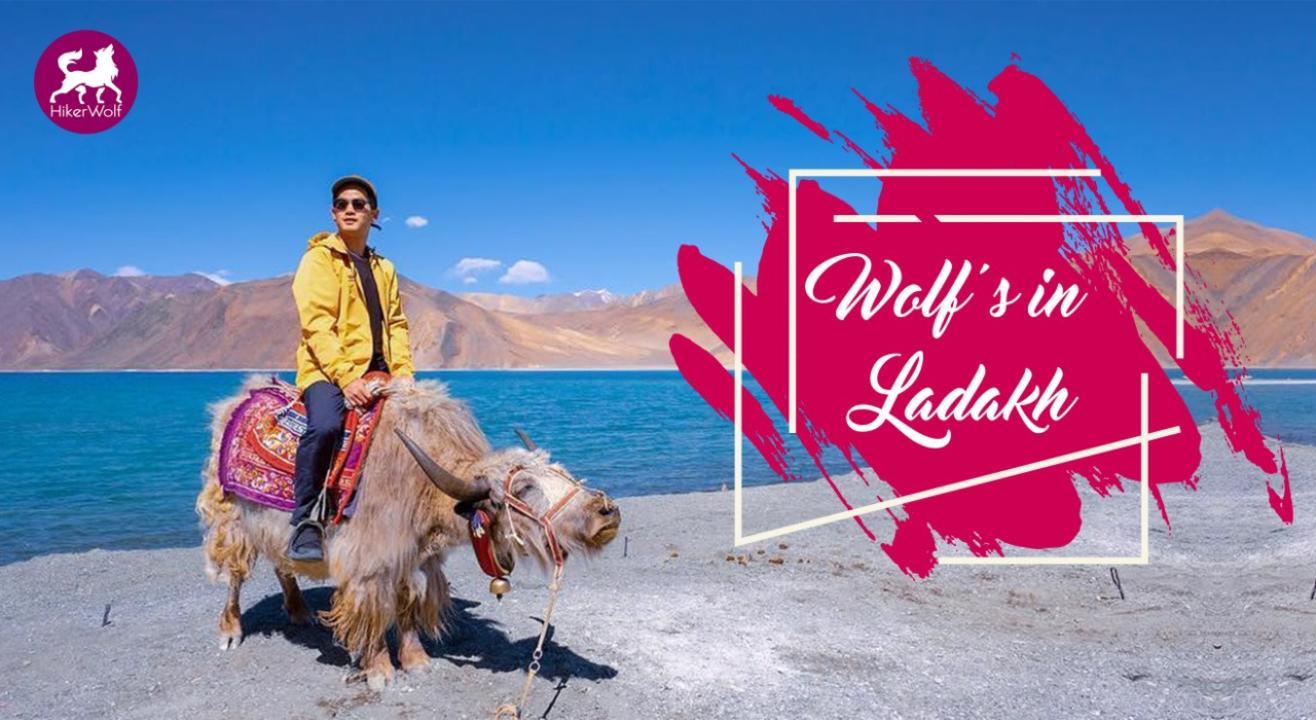 HikerWolf - Wolf's in Ladakh