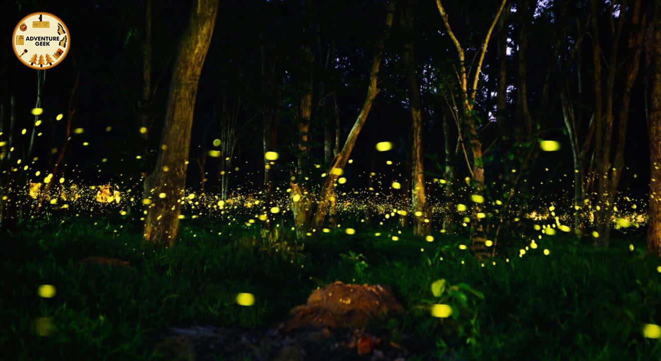 Fireflies Special Camp At Kothaligad | Adventure Geek