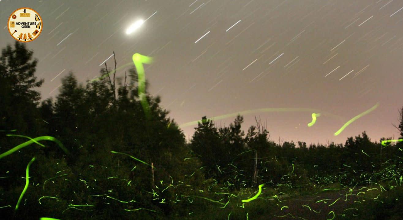 Fireflies Special Event at Purushwadi | Adventure Geek