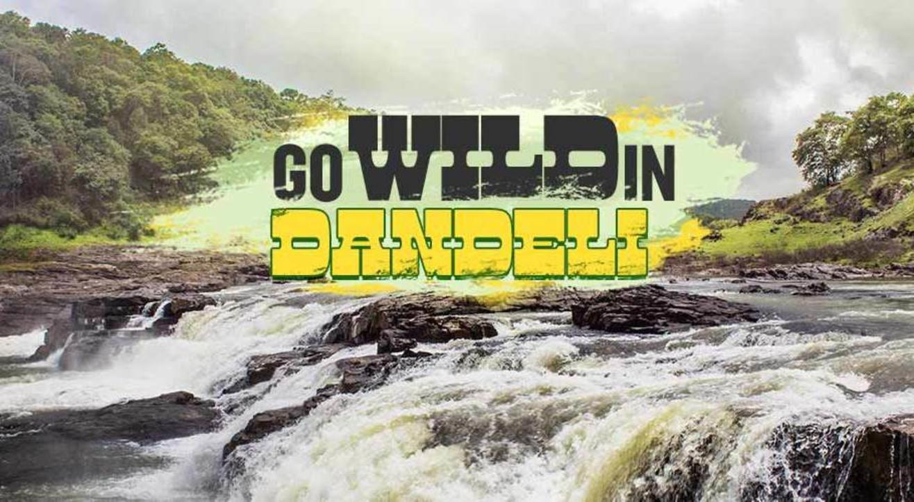 Go Wild In Dandeli | Rafting,Camping,Wildlife | Namma Trip