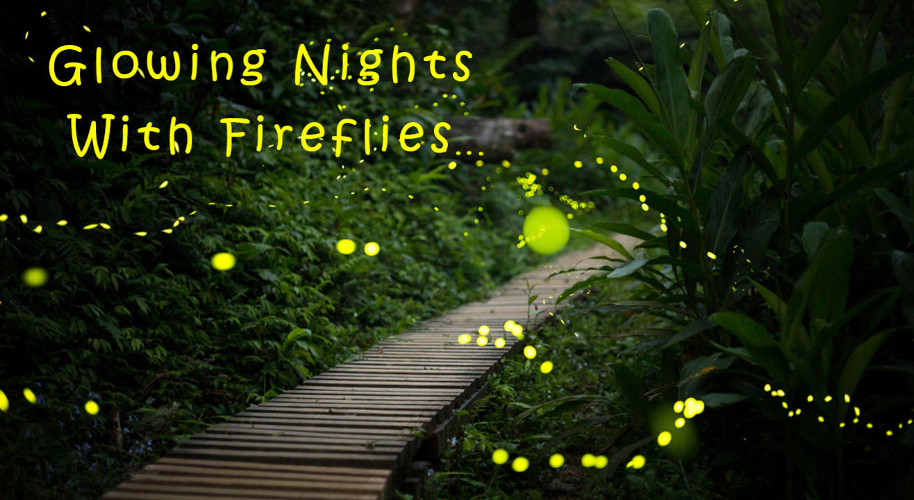 Glowing Nights With Fireflies by Miles & Smiles