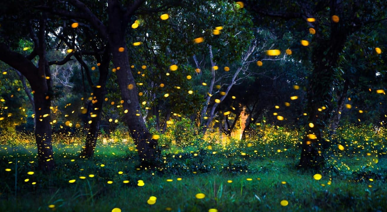 Prabalmachi Fireflies Trek - Insider.in