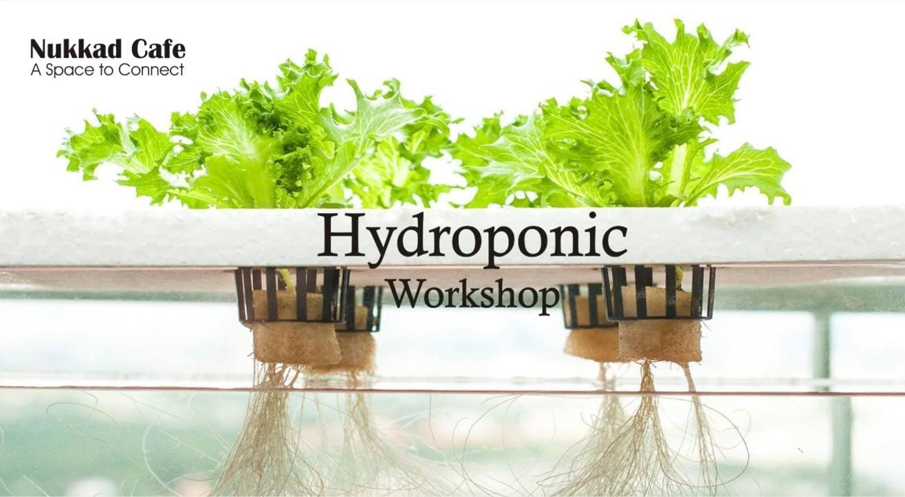 Soil-less Kitchen Gardening (Hydroponics) Workshop