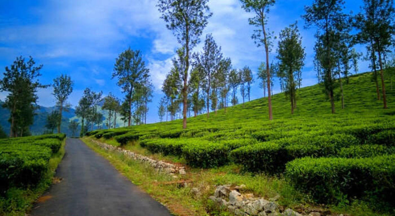 Wayanad night trek and camping | Safarnama
