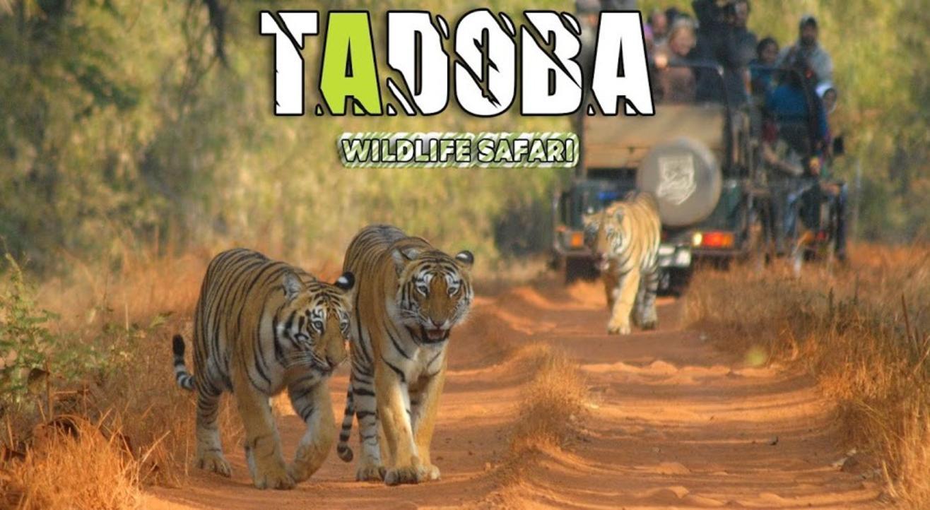 Tadoba Wildlife Safari | Travel Trikon