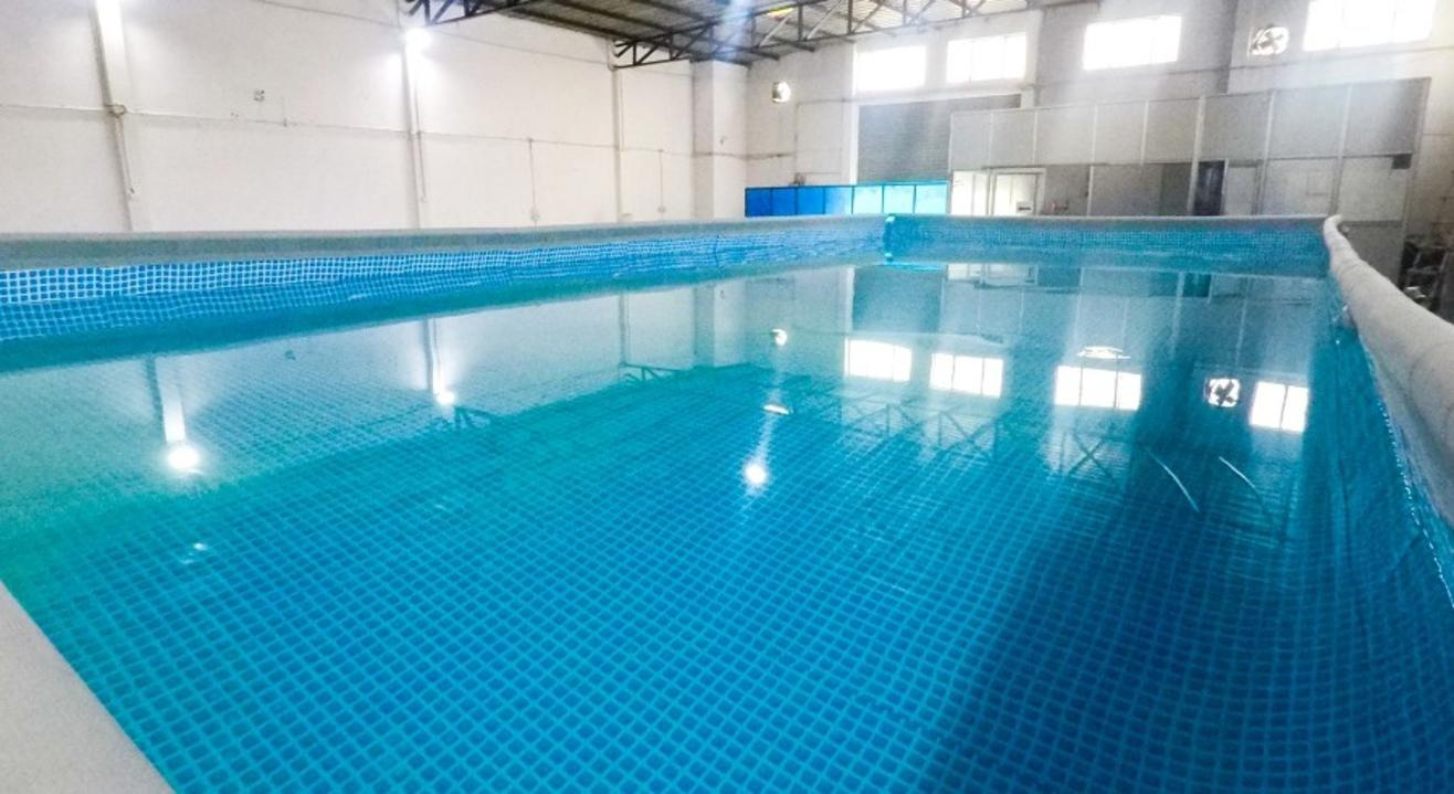 Fitso SEALs Swimming Classes Swiss Cottage