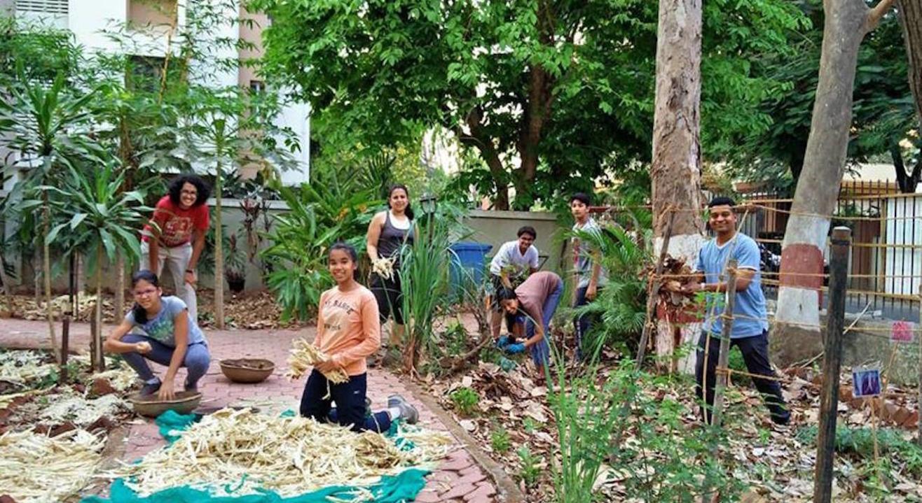 Dream Grove Bandra Community Farm
