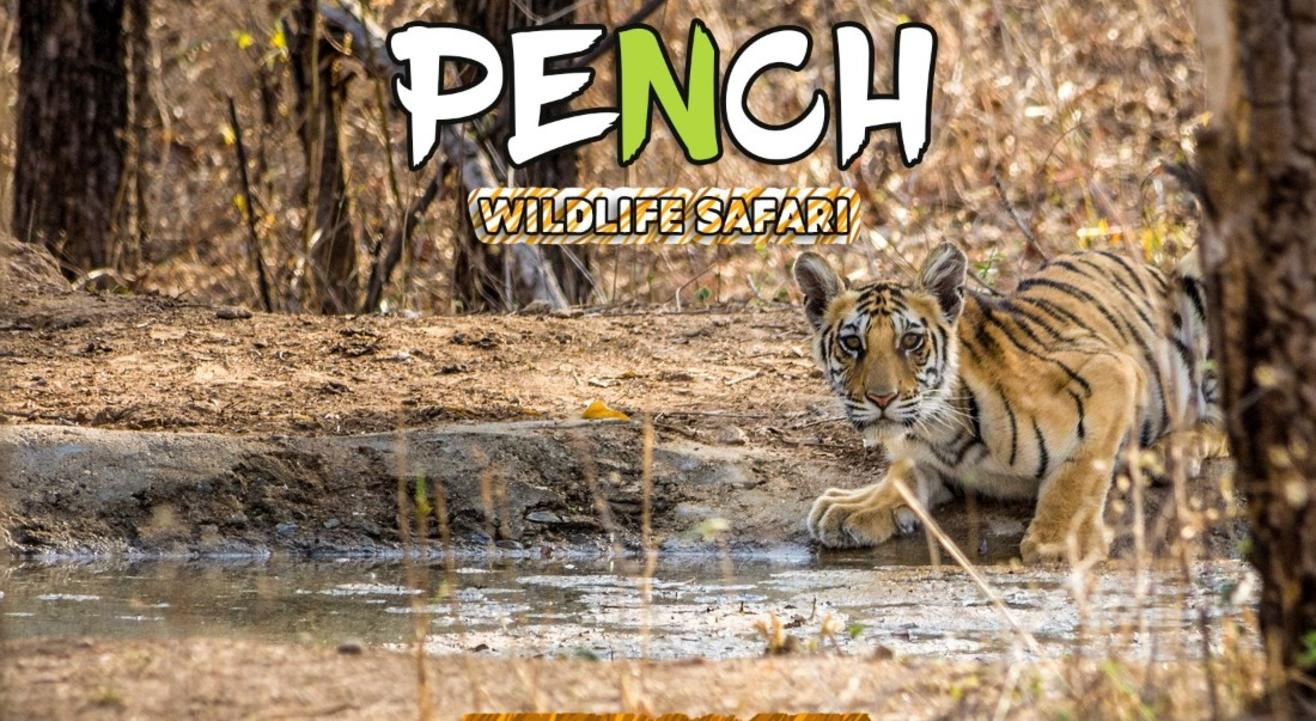 Pench National Park Wildlife Safari | Travel Trikon