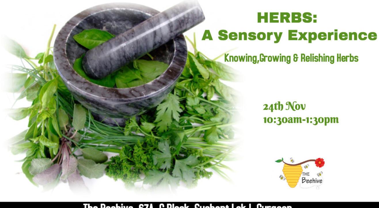 Herbs: A Sensory Experience