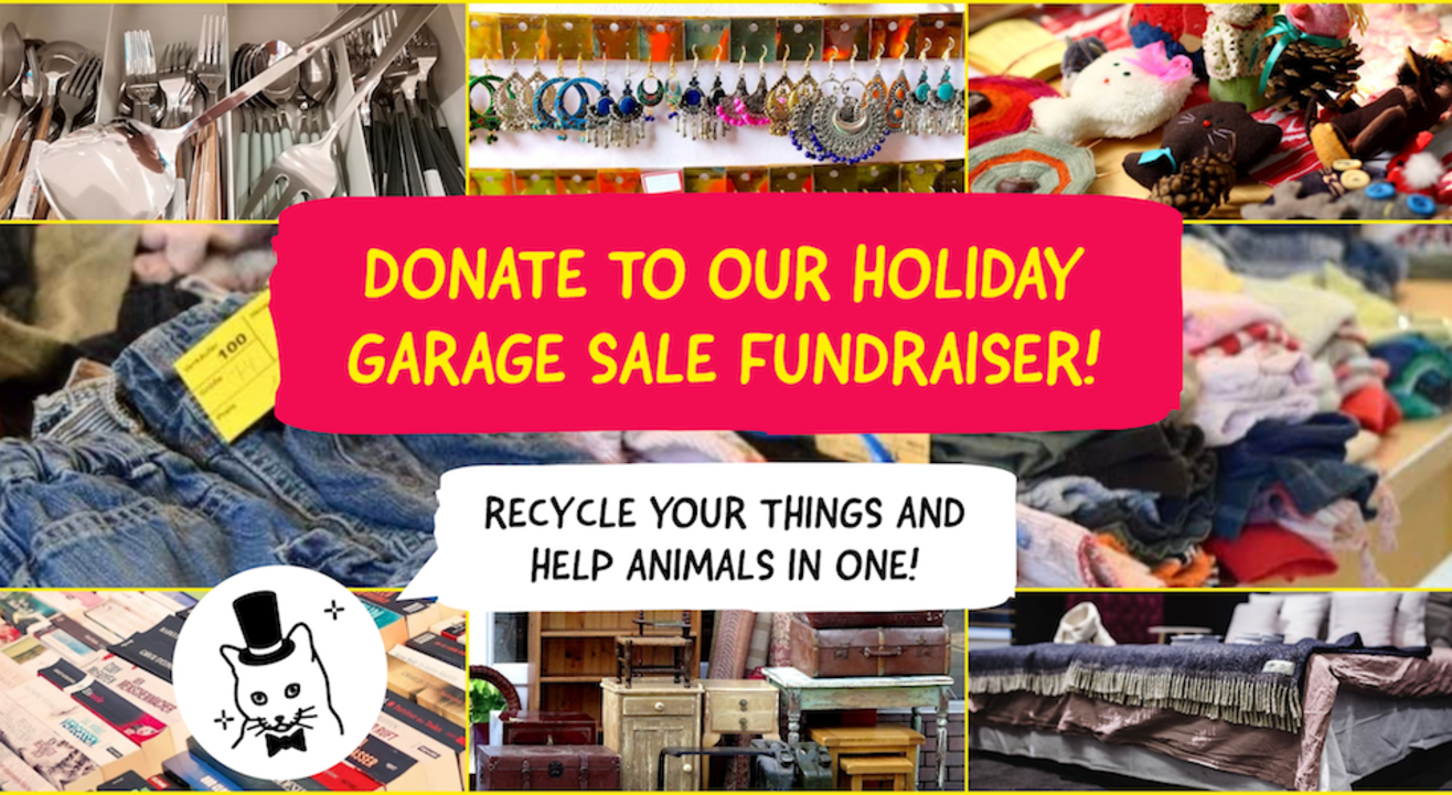 Donate to The Feline Foundation Garage Sale