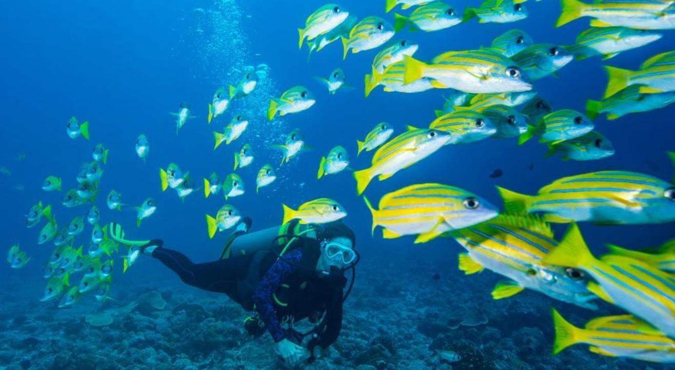 Scuba Diving Near Vasco