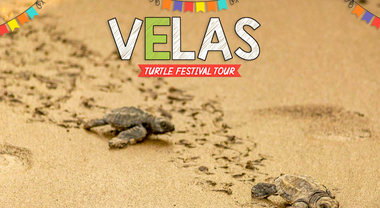 Velas Turtle Festival Tour with Trikon