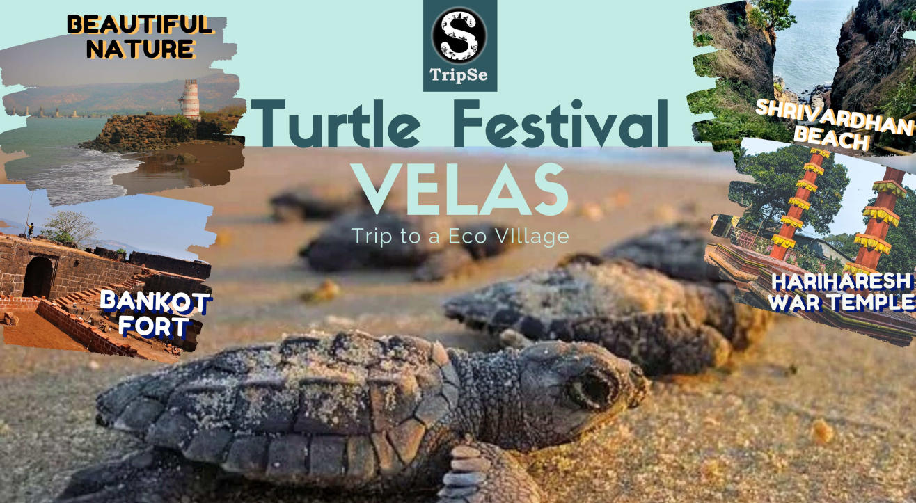 Velas Turtle Festival With Tripse