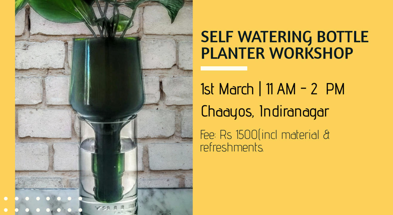 Self watering bottle planter workshop