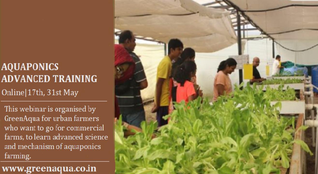 Aquaponics Farming Training -Advanced & Commercial