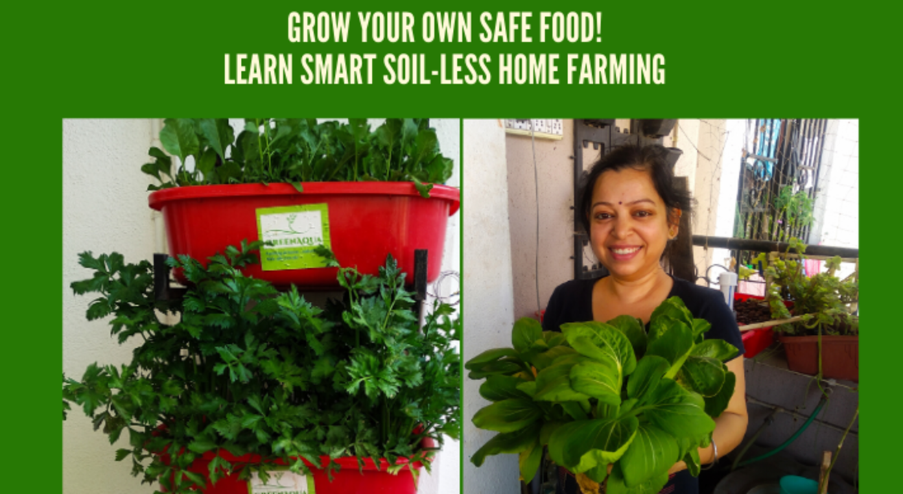 Grow your own greens! Soil-less smart home farming, pure for sure!