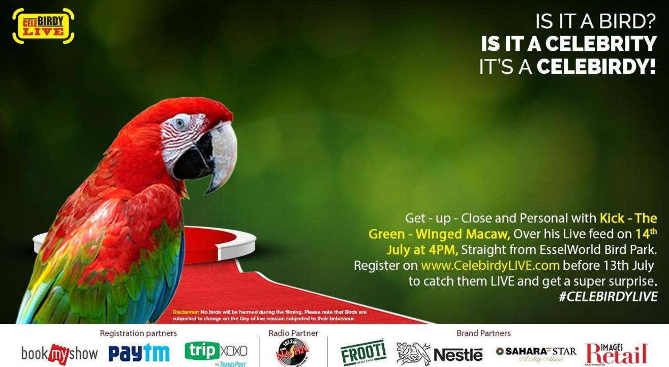 Get up-close and personal with Kick - The Green-Winged Macaw