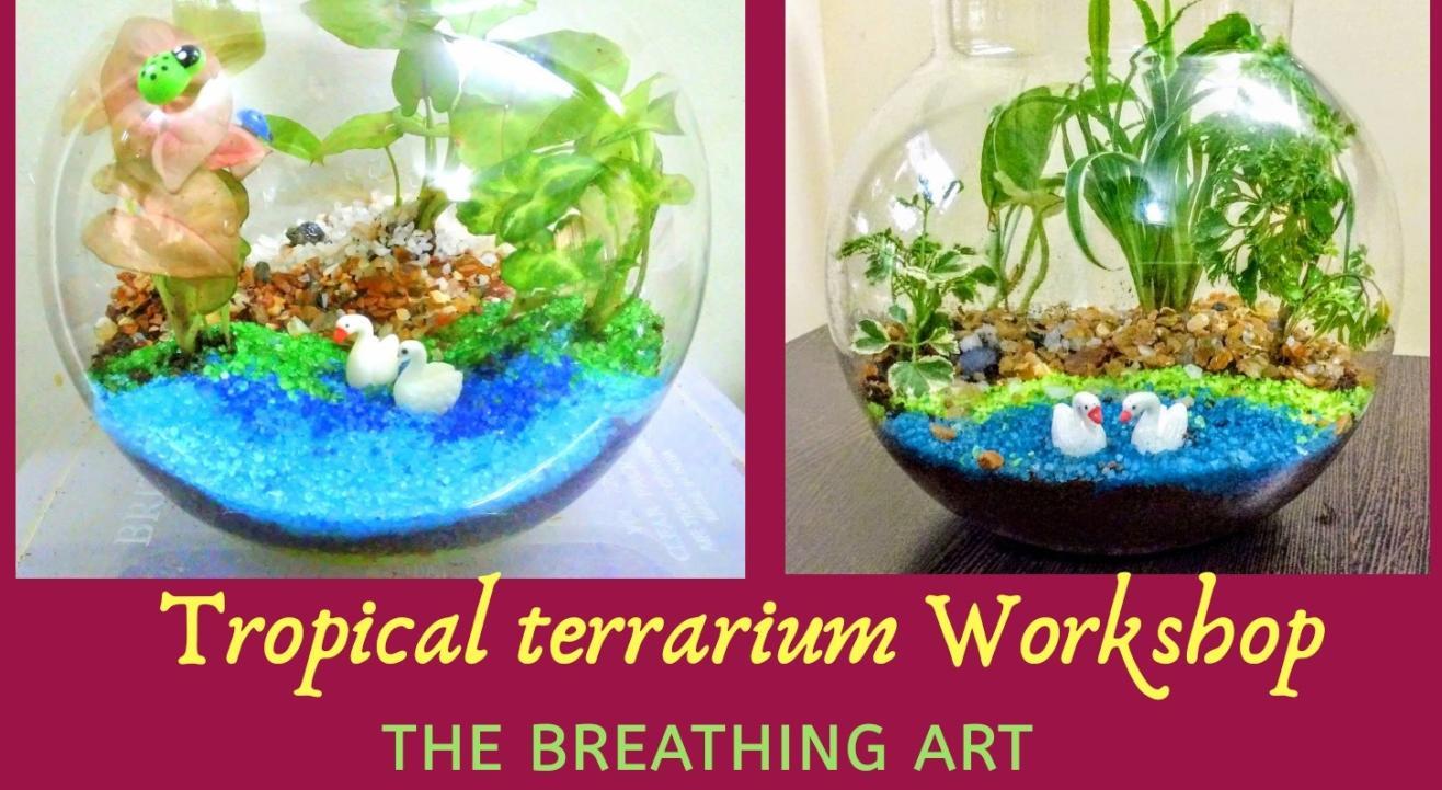 18th July Online Tropical terrarium workshop