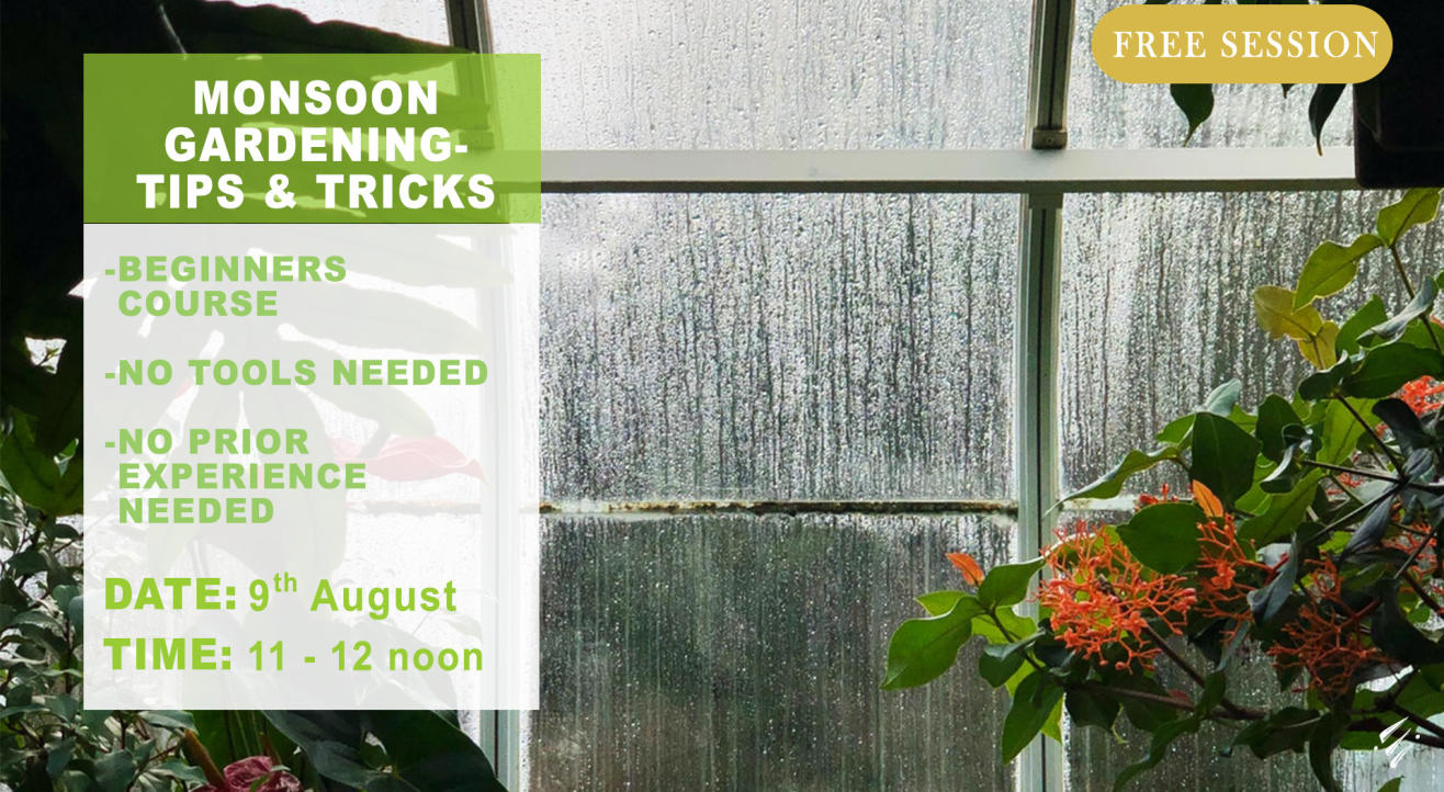 Monsoon Gardening – Tips & Tricks