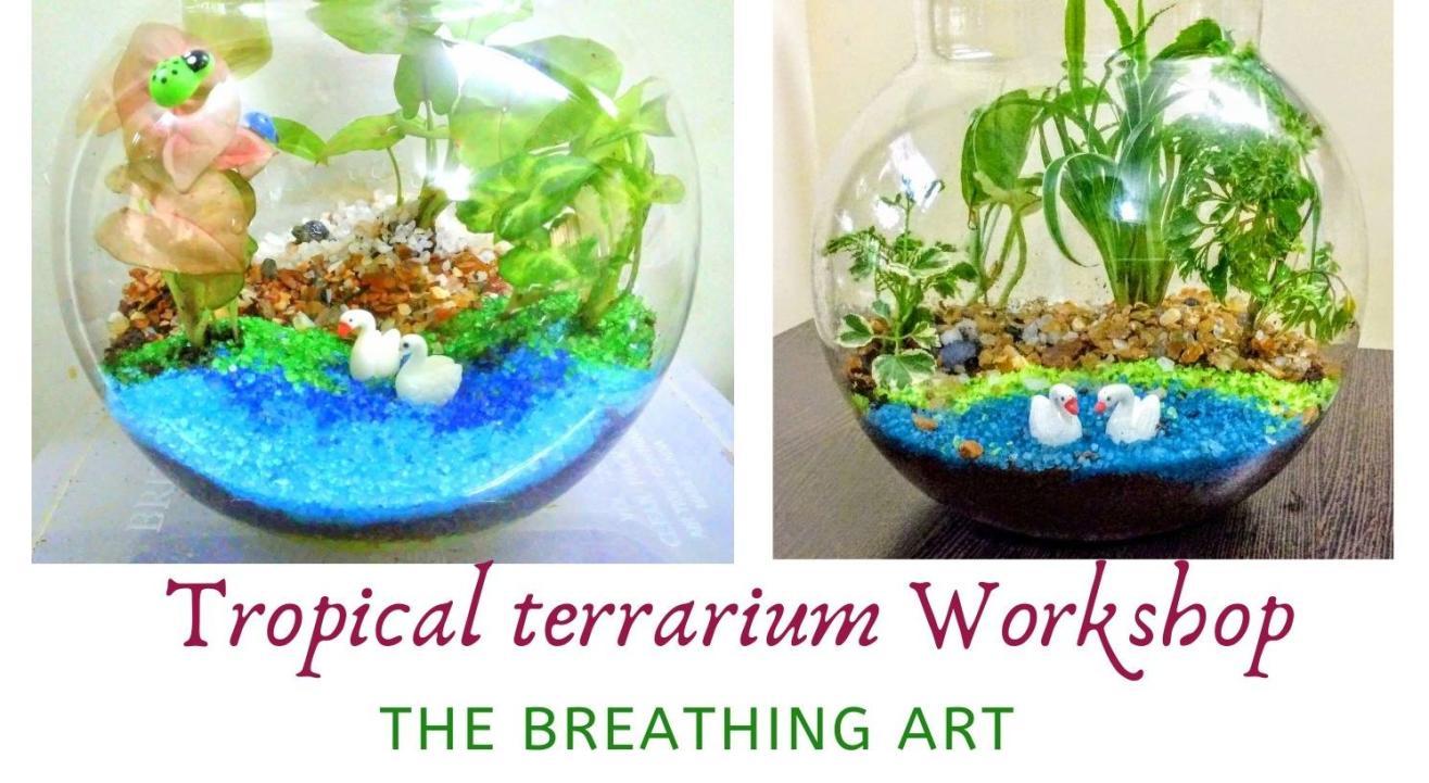 2nd Aug Online Tropical Terrarium Workshop
