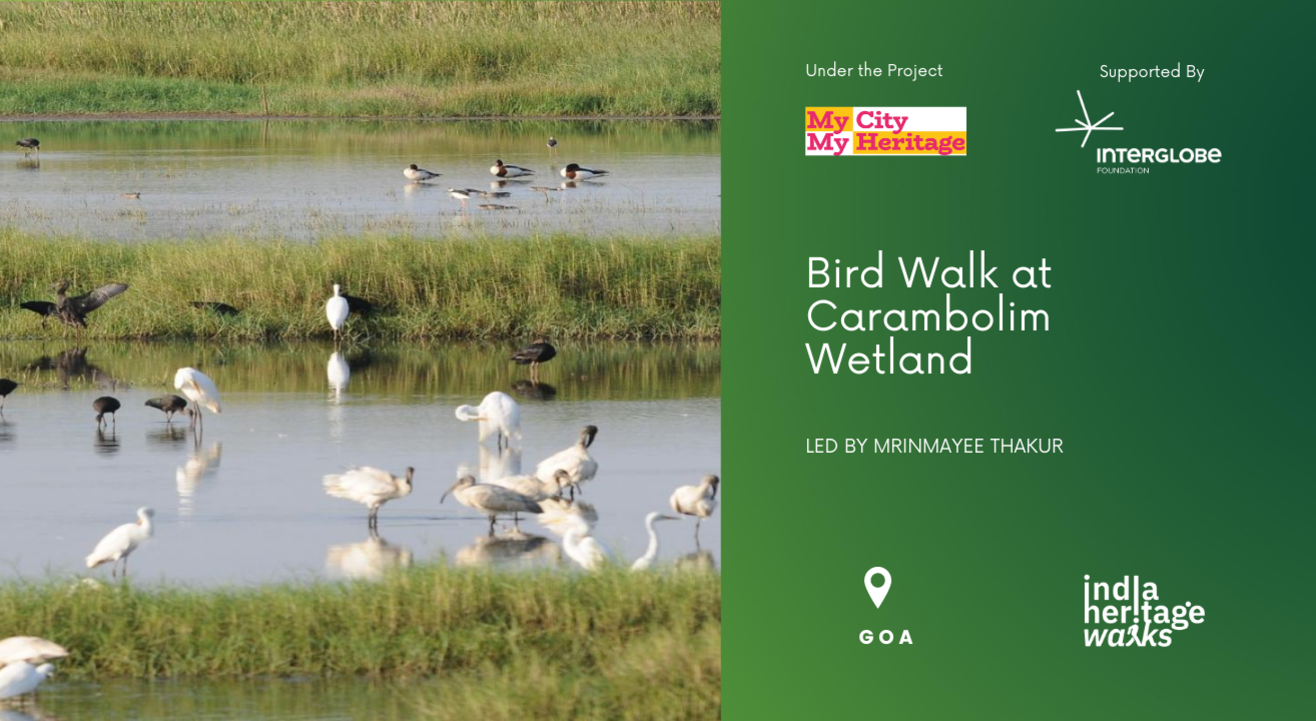 Bird Walk at Carambolim Wetland