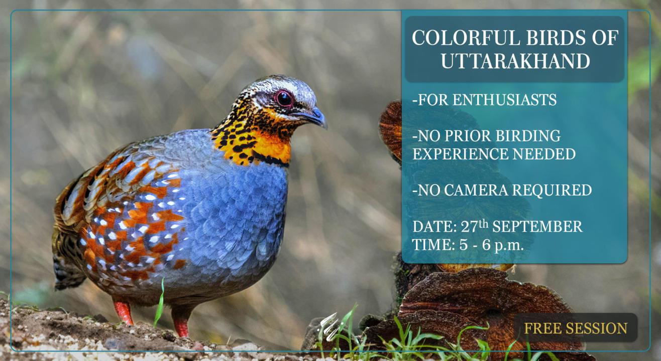Colorful Birds of Uttarakhand