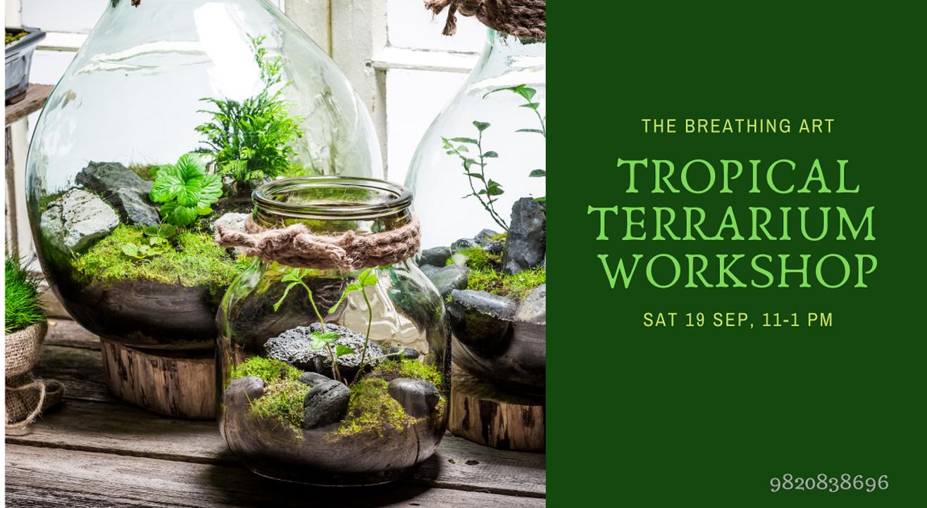 19th Sept Online Tropical Terrarium Workshop