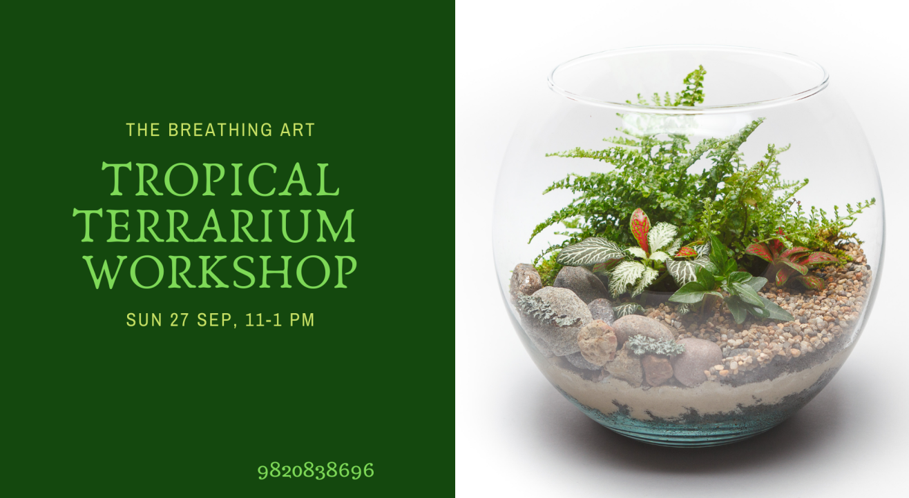 27th Sept Online Tropical Terrarium Workshop