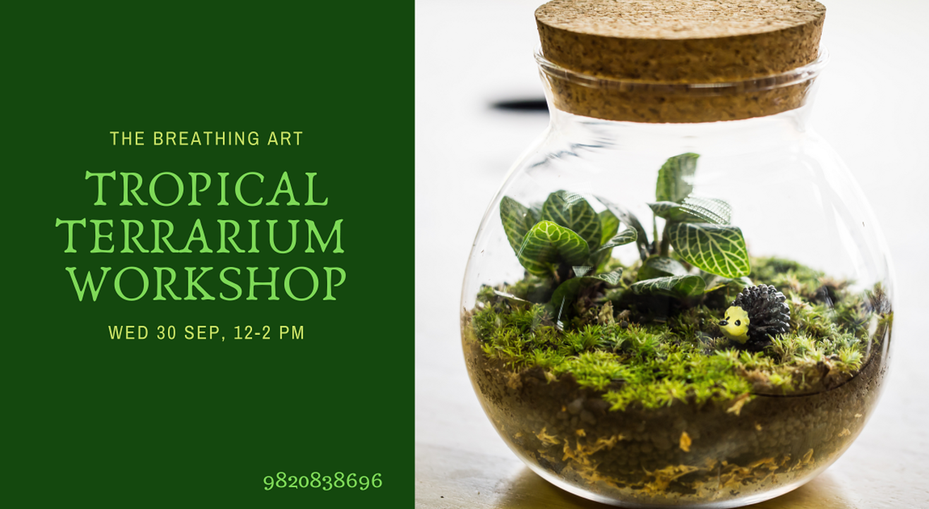 30th Sept Online Tropical Terrarium Workshop