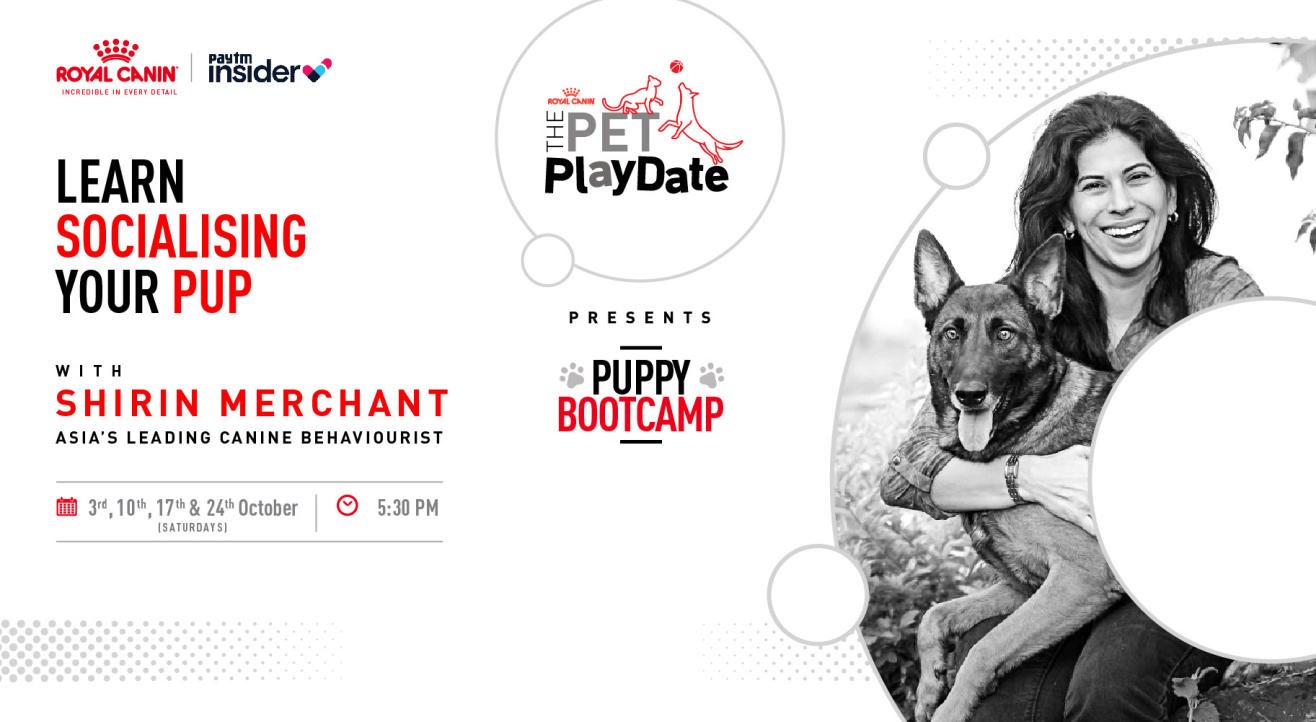 The Pet Playdate with Royal Canin Feat. Shirin Merchant