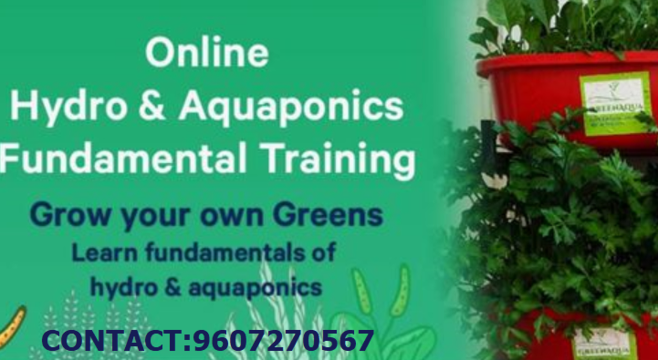 Hydroponics or Aquaponics? Learn both to decide wise!