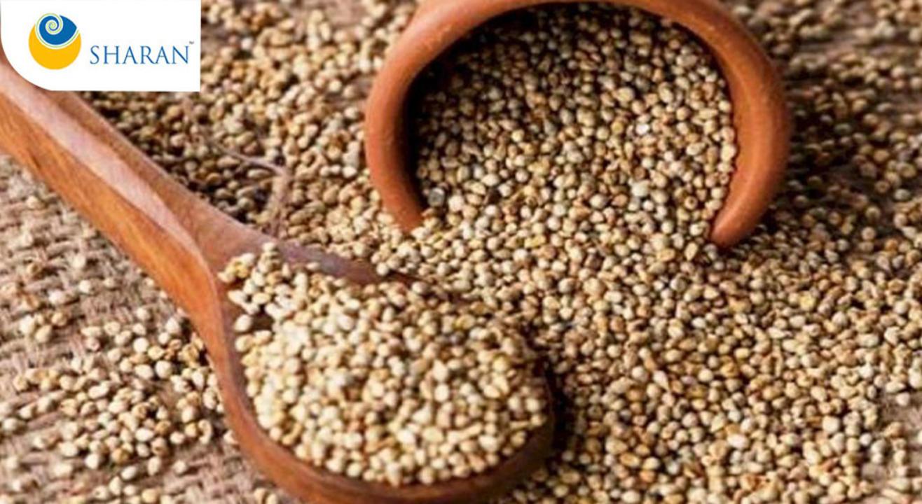 मिलेट सिरीज़ 1: बाजरा, The Millet Series 1: Bajra (Hindi)