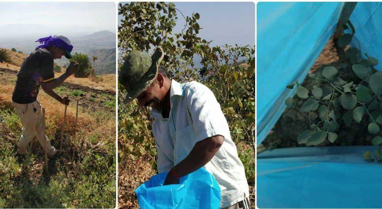 Protect saplings at Taloja Hill with tree guards