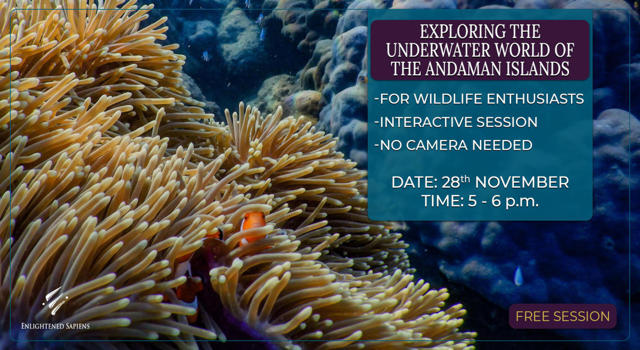 Exploring the Underwater world of the Andaman Islands