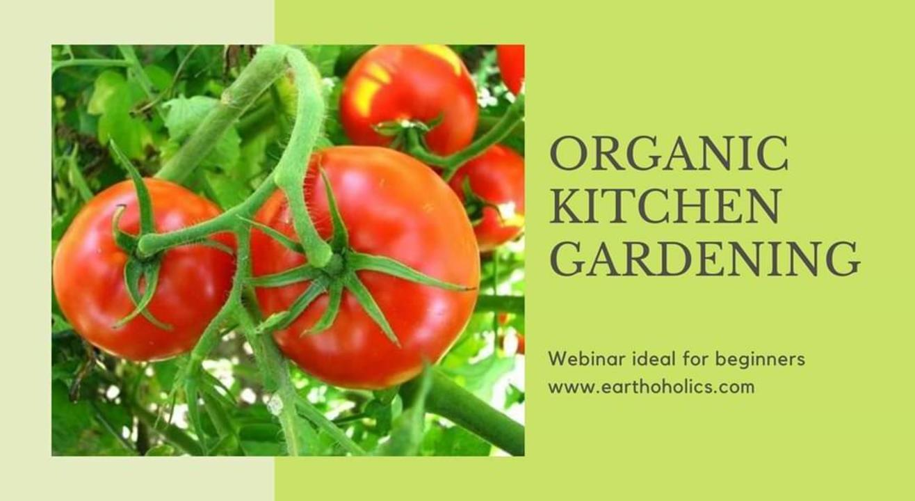 Online: Organic kitchen gardening workshop