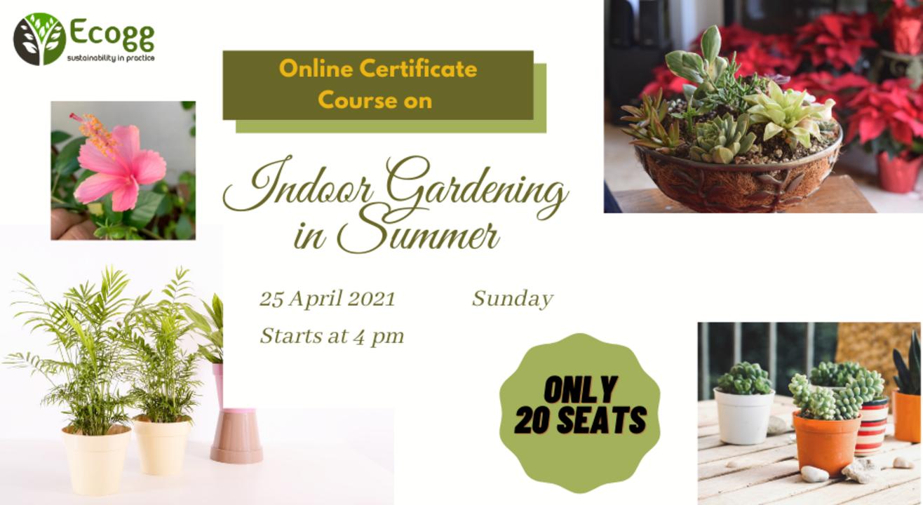 Indoor Gardening in Summer